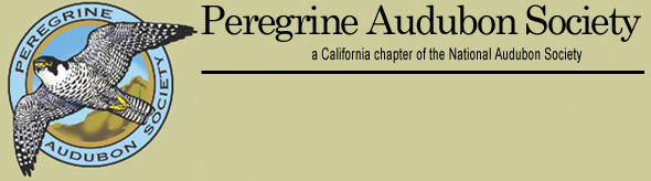 Peregrine Audubon Society - A California chapter of the National Audubon Society